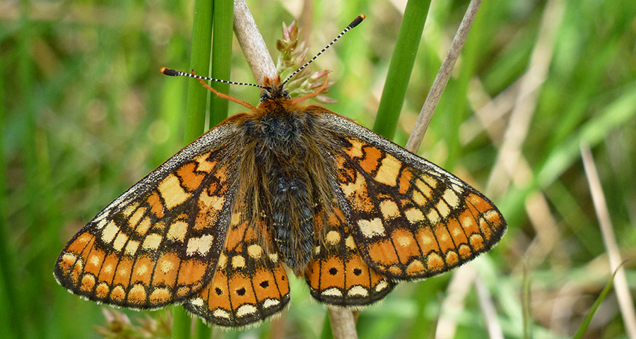 Marsh Fritillary surveys, Bat low impact license, Bat and barn owl survey, Bird surveys, Invertebrate surveys, Insect surveys, Dormouse surveys, Reptile surveys, Cornwall, Devon and the south west.